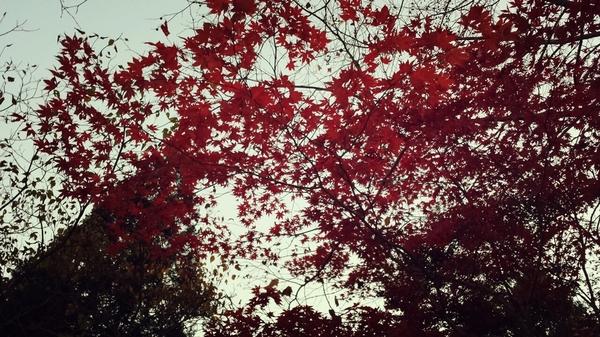 2013-11-25-21-16-30_deco.jpg